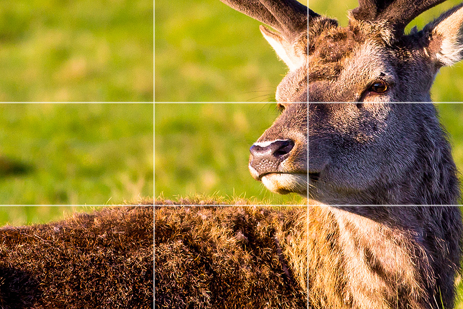 Rule of Thirds Portrait example