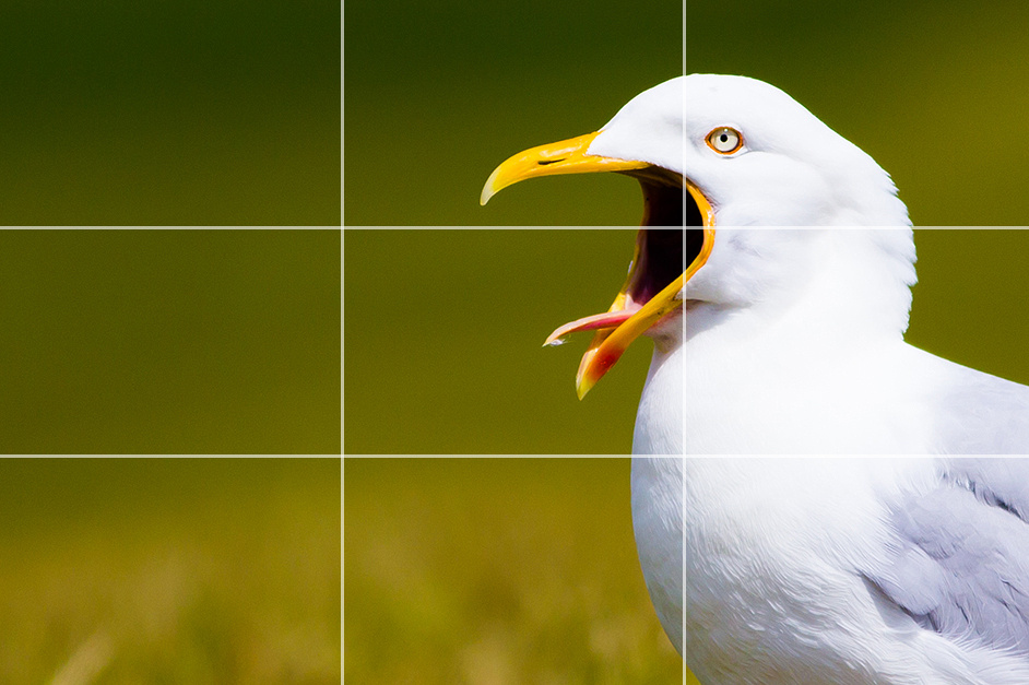 Rule of Thirds after crop