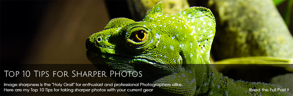 Top 10 Tips for Sharper Photos